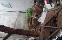Bán gấp mảnh đất tại Cửu Việt 2 – Trâu Quỳ - Gia Lâm