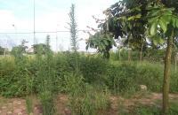 Bán gấp mảnh đất khu TĐC Trâu Quỳ, Gia Lâm. Dt 43.9m2- 31 triệu/m2