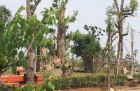 Đầu tư  đất nền dự án Biệt Thự Phú Cát City chỉ 9tr/m thiên đường tận hưởng