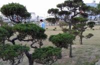 Bán đất nền khu tái đinh cư Bắc Phú Cát  chỉ 10tr/m – Biệt thự Phú Cát City