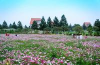 Bán lô biệt thự 400m trong khu đô thị sinh thái Phùng Cạnh Vin City Đan Phượng