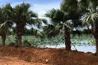 Mua đất Hòa Lạc không thể không qyan tâm đất tại Xã Bình Yên. Lh 0977.503.268 chỉ từ 600 triệu /lô