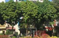 Bán nhà khu phân lô Cổ Linh,kinh doanh,view vườn hoa,80m,5 tầng,giá 10,8 tỷ.Lh:0989126619.