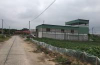 Bán gọn 81m2, Khu Đấu Giá Đình Tổ, Thuận Thành. Đường 13m, giá đầu tư.